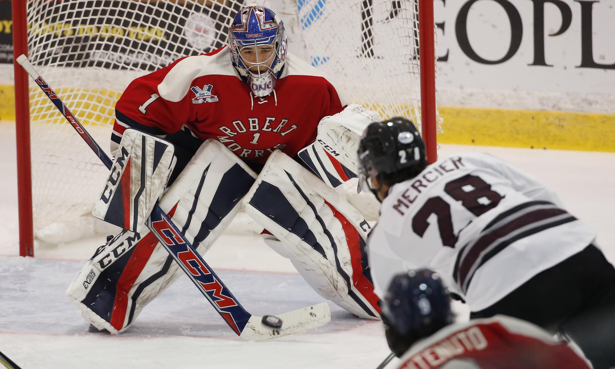 Francis Marotte Named To Mike Richter Award Watch List Robert